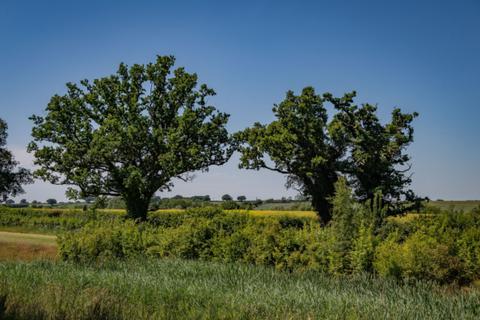 William Davis Homes - Buttercup Fields