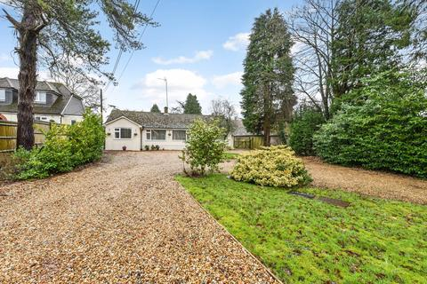 4 bedroom detached bungalow for sale - Lymington Bottom Road, Medstead, Alton, Hampshire