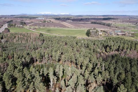 Woodland for sale - Black Isle, Ross-shire IV1