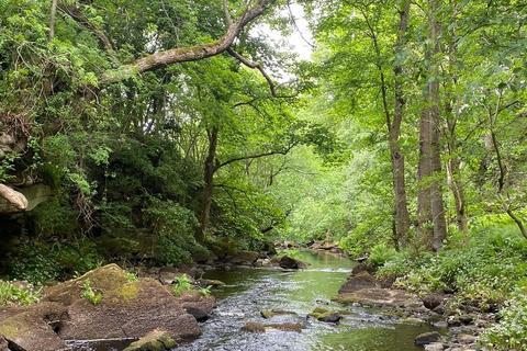 Land for sale - Eden Wood, Briscoe Lane, Baldersdale