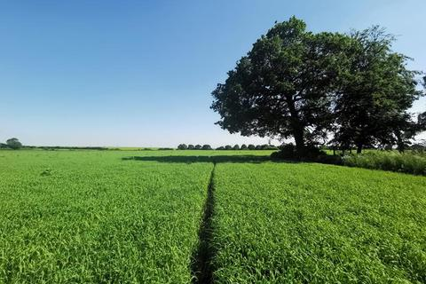 Farm for sale - Arable Land South Of Common Road, North Runcton , King's Lynn , Norfolk