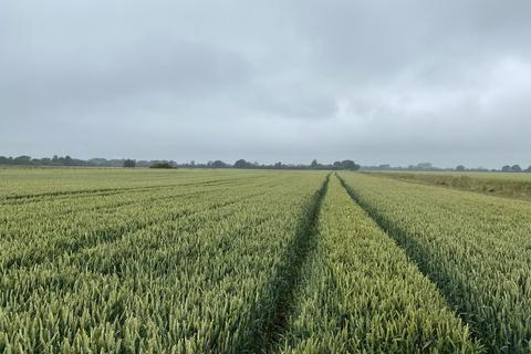 Land for sale - 47.96 Acres of Arable Land, Long Lane, Belby/Eastrington DN14 7XB