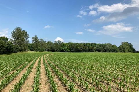 Farm for sale - Land At Lodge Farm, Stubbs Green, Loddon, Norwich, Norfolk
