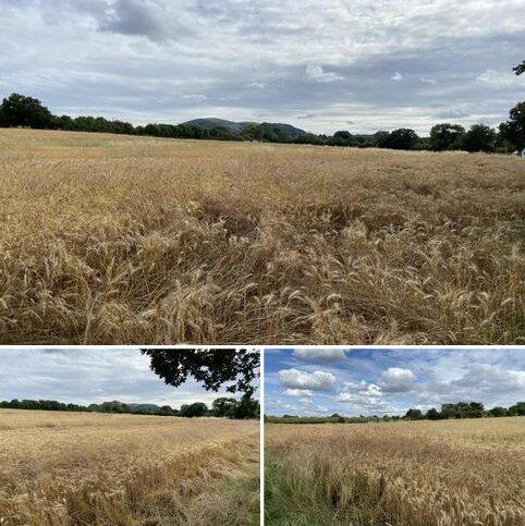 Farm land to rent - Land at Grit Lane, Malvern WR14