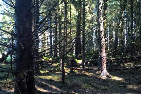 Woodland for sale - Patna , East Ayrshire  KA6