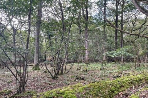 Farm land for sale - Part Shearnfold Wood, Kilndown Road, Flimwell, Wadhurst, Kent