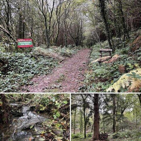 Woodland for sale - Llawhaden SA67