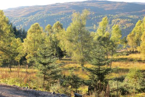 Land for sale - Nr Cannich, Inverness-shire IV4