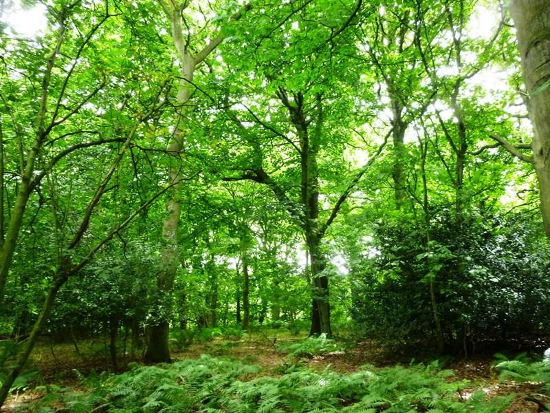 Land Commercial for sale in The Little Wenlock Woodlands, Little Wenlock, near Telford, Shropshire TF6 5AP