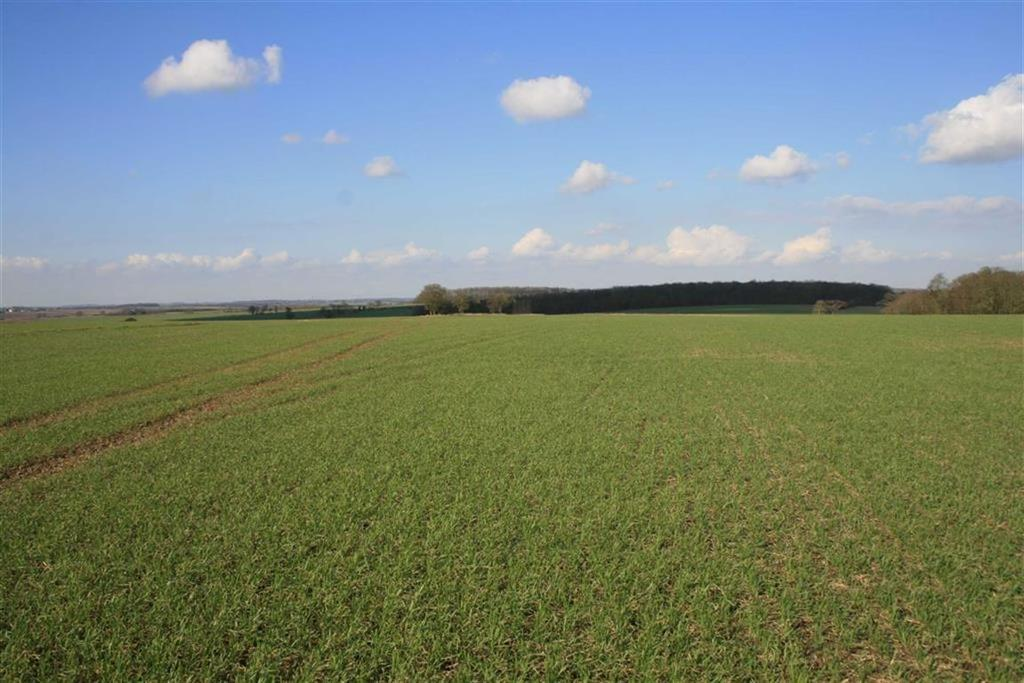 Land Commercial for sale in Friars, Braughing, Ware, Hertfordshire