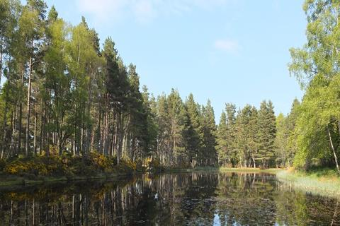 Land for sale - The Holme and Sawmill Woods, Near Inverness, Inverness-shire IV3