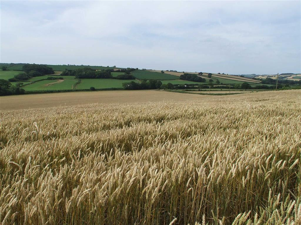 Land Commercial for sale in Coldridge, Coldridge, Crediton, Devon, EX17
