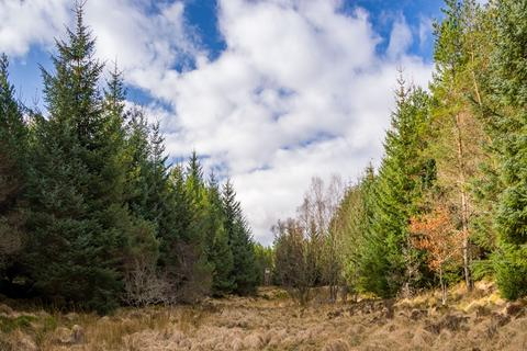 Land for sale - Westerton Wood, Near Dores, Inverness-shire