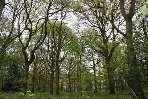 Land for sale - LOT 3 - Woodland at Cherry Garden Farm, Woodchurch