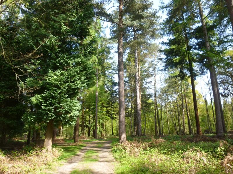 Land Commercial for sale in Redleaf Wood and The Grove, Chiddingstone Causeway, near Tonbridge, Kent TN11