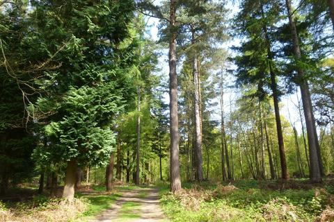 Land for sale - Redleaf Wood and The Grove, Chiddingstone Causeway, near Tonbridge, Kent TN11