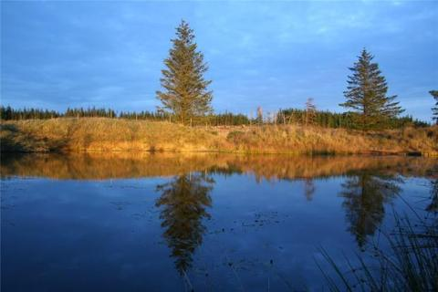 Plot for sale - North Quintfall Forest, Caithness