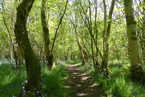 Land for sale - Broad Wood, Nr Sundrum, Ayrshire, KA6