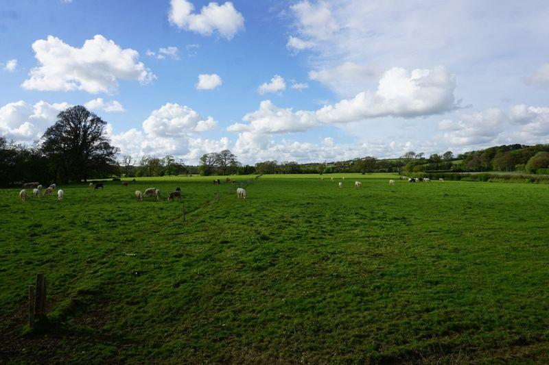 Land Commercial for sale in Tettaridge, Liftonton Down, Lifton