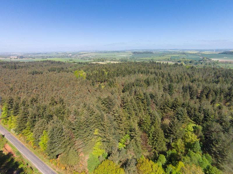 Land Commercial for sale in Blackdown Wood, Briantspuddle, near Dorchester, Dorset