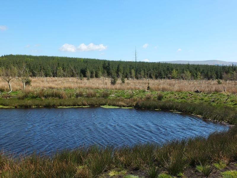 Land Commercial for sale in Craigburn Wood, Leadburn, Peeblesshire, EH46