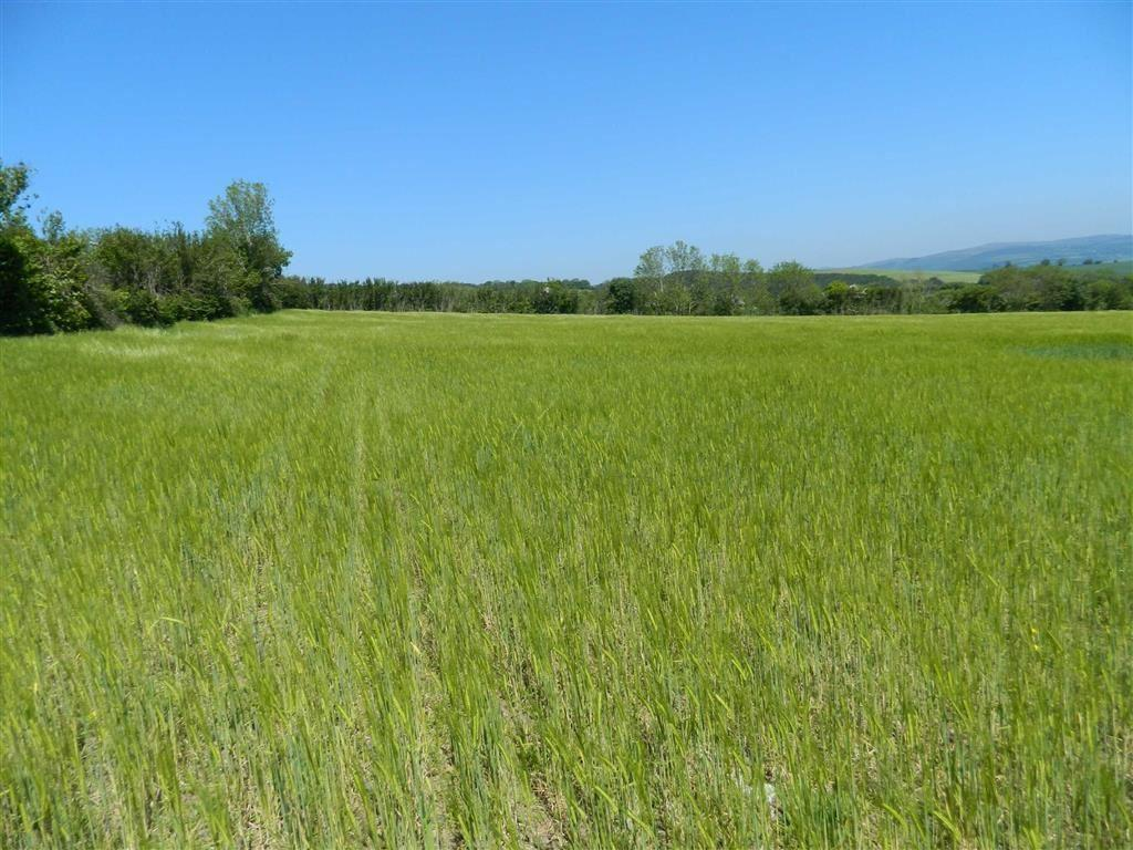 Land Commercial for sale in Dean Prior, Buckfastleigh, Devon, TQ11