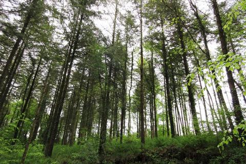 Land for sale - Bradford Moor Wood, Witheridge, Devon EX16