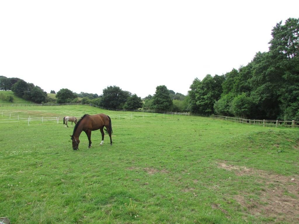 Land Commercial for sale in Forest Road, Cuddington