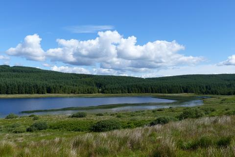 Land for sale - Achavraid Forest, Nr Tarbert, Argyll PA29