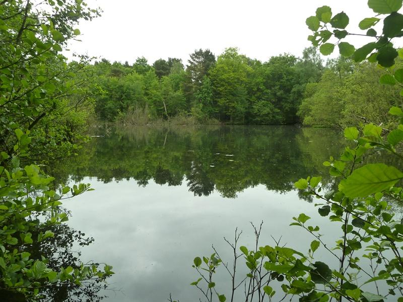 Land Commercial for sale in Potters Pool Wood, Mytchett, near Camberley, Surrey GU16
