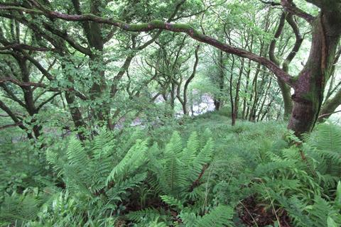 Land for sale - Higher Smythen Wood, near Combe Martin, Devon