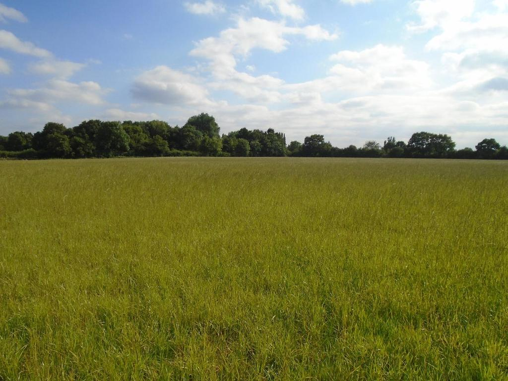 Land Commercial for sale in Off Narrow Lane, Wigginton, York