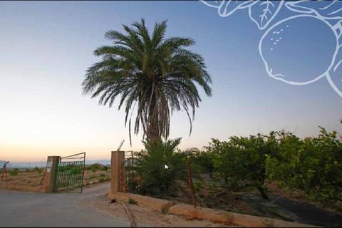 2 bedroom apartment  - Algorfa, Alicante