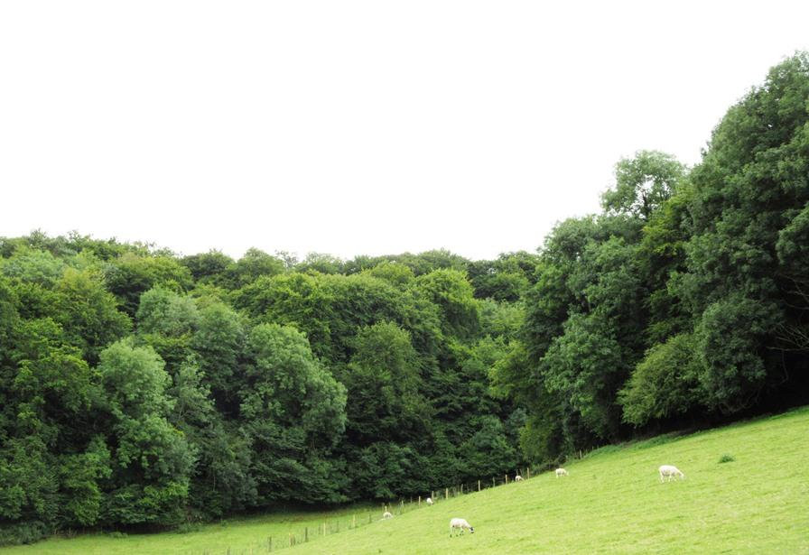 Land Commercial for sale in The Hermitage Woodlands, Dursley, Gloucestershire For Sale As a Whole or in Two Lots
