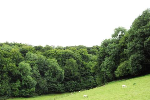 Land for sale - The Hermitage Woodlands, Dursley, Gloucestershire For Sale As a Whole or in Two Lots