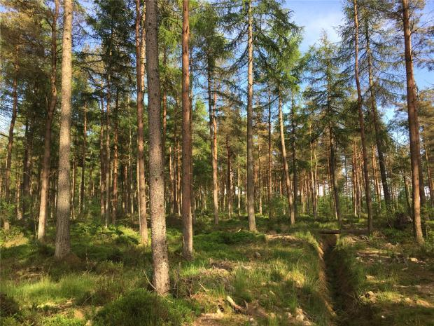 Land Commercial for sale in School Wood, Near Forestmill, Clackmannanshire