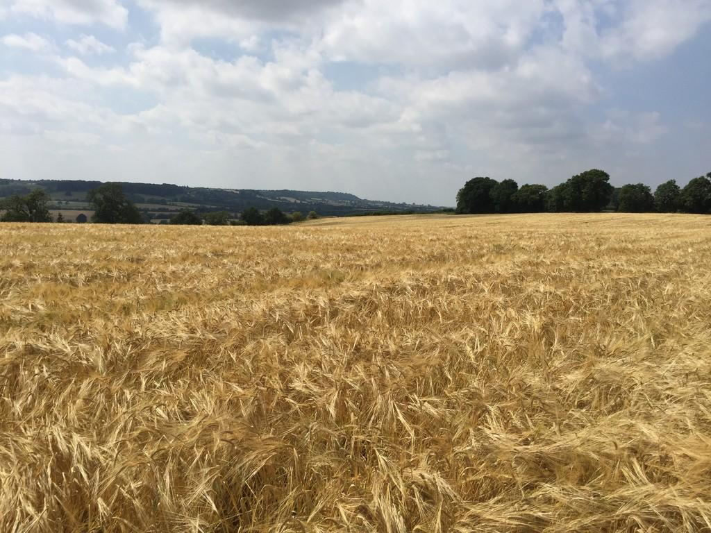 Land Commercial for sale in Land off Roundhill Road and March Road, Mollington