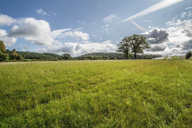 Large Pasture