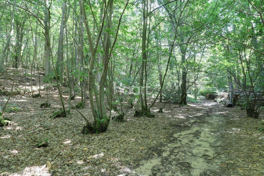 Land Commercial for sale in Stodham Lane, Liss