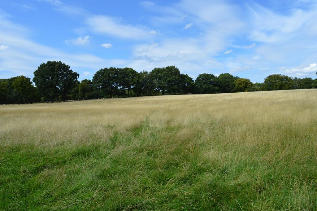 Land Commercial for sale in Bethersden, TN26