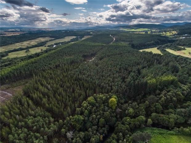 Land Commercial for sale in Tullich Wood The Wilderness, Scotsburn, By Invergordon