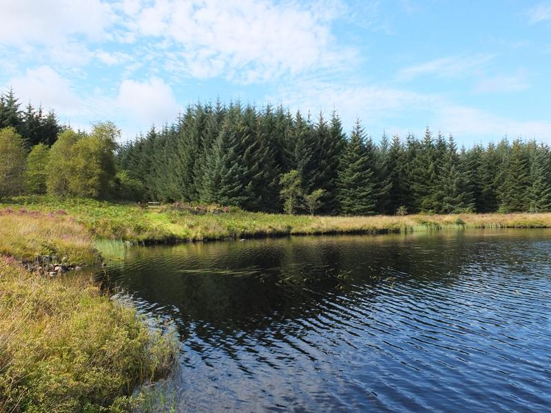 Land Commercial for sale in Dornal South Woodland Loch, Newton Stewart, Dumfries Galloway DG8