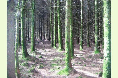 Land Commercial for sale in WOODLAND, Embury Wood, Nr Hartland, Devon EH39