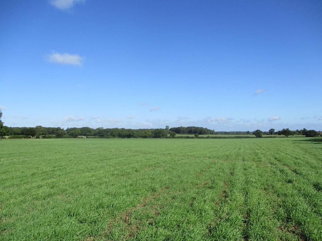Land Commercial for sale in Framlingham