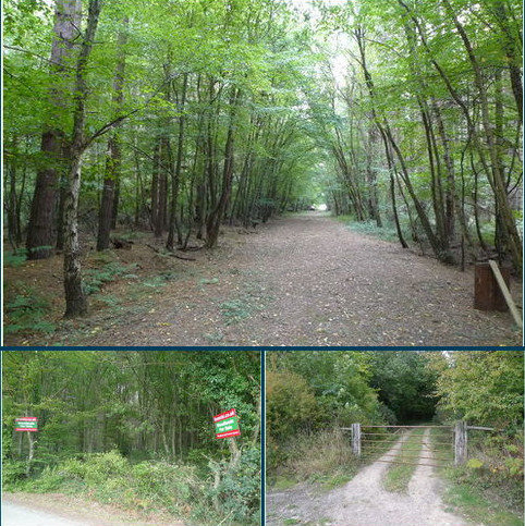 Land for sale - WOODLAND, Briar Wood, Benacre, Near Hothfield TN26