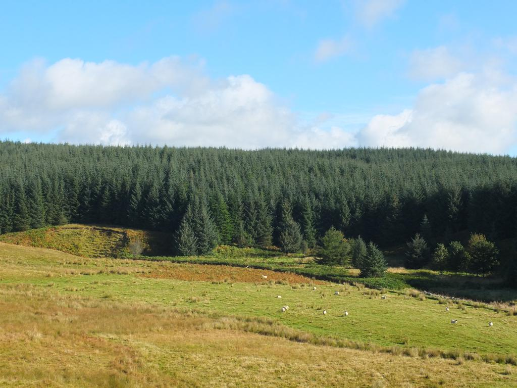 Land Commercial for sale in Holmhead Forest, Near Moniaive, Dumfries and Galloway DG3