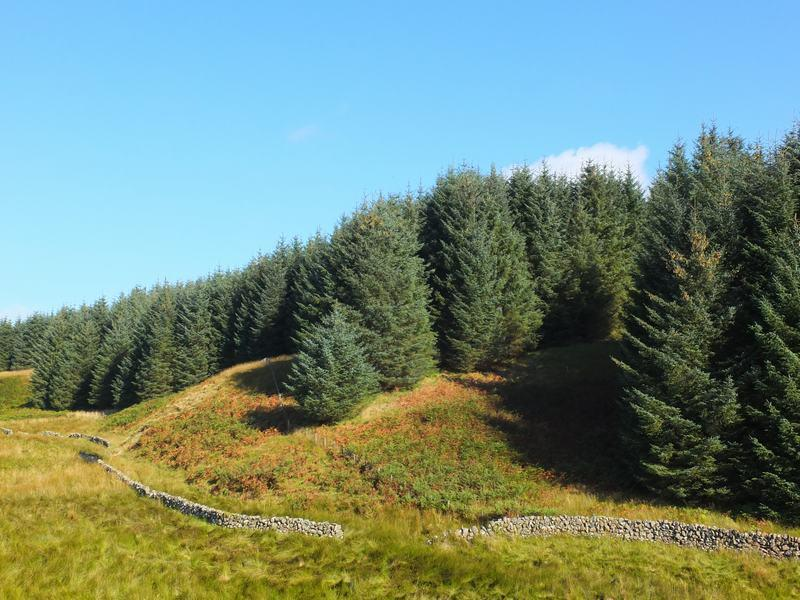Land Commercial for sale in Near Moniaive, Dumfries and Galloway