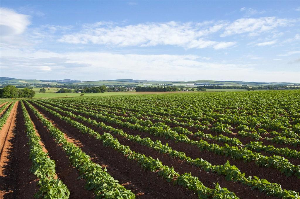 Land Commercial for sale in Lot 1 Land At Waterlair Farm, Fordoun, Laurencekirk, Kincardineshire, AB30