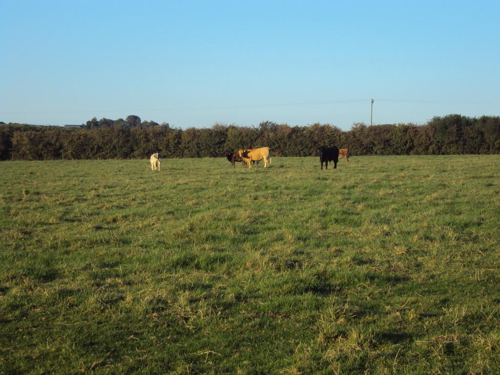 Land Commercial for sale in Paddock Land off Bicester Road, Marsh Gibbon