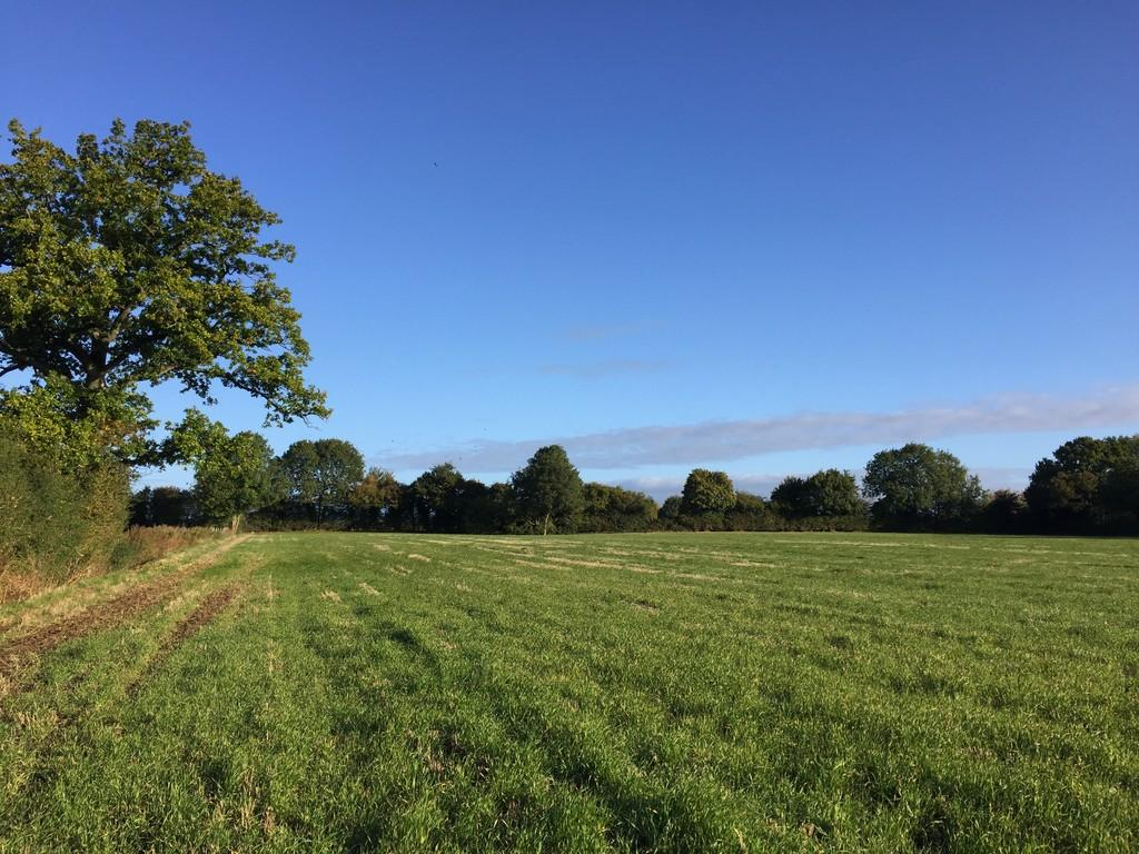 Land Commercial for sale in South Lopham, Nr Diss
